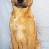 Adopt A Pet :: Beca - Fredericksburg, TX
