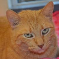 Adopt A Pet :: Tomcat - New Iberia, LA