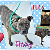 Adopt A Pet :: Roxy - Jerome, ID