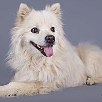 Adopt A Pet :: Coco - Lodi, CA