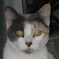 Adopt A Pet :: Aphrodite - Mobile, AL