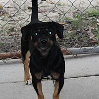 Adopt A Pet :: Teddy - Daleville, AL