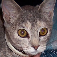 Adopt A Pet :: Ellie - Metamora, IN