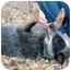 Photo 3 - Australian Cattle Dog Dog for adoption in Siler City, North Carolina - Meara