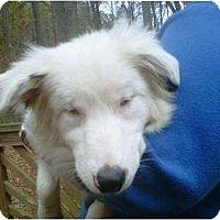 Adopt A Pet :: Abby - Seneca, SC