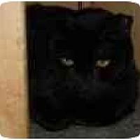 Adopt A Pet :: Midnight - North Boston, NY