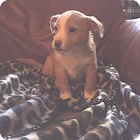Adopt A Pet :: PAXTON - Salt Lake City, UT