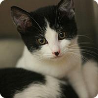 Adopt A Pet :: Jill - Canoga Park, CA