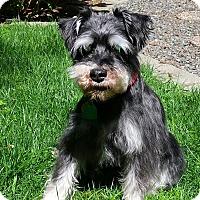 Adopt A Pet :: George - Lynnwood, WA