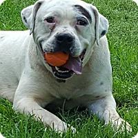 Adopt A Pet :: Patch - Palestine, TX