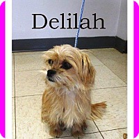 Adopt A Pet :: Delilah - Shawnee Mission, KS