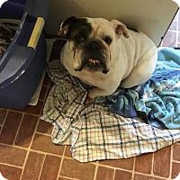 Adopt A Pet :: Sophie - Freeport, NY