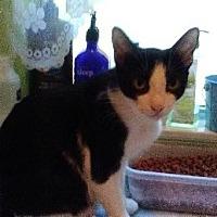 Adopt A Pet :: Uno - Sarasota, FL
