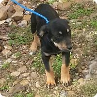 Adopt A Pet :: Tucker - East Hartford, CT