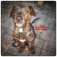 Adopt A Pet :: Thelma - Houston, TX