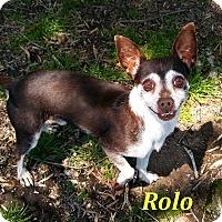Adopt A Pet :: Rolo - El Cajon, CA