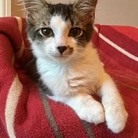 Adopt A Pet :: Dawson - Centerville, GA