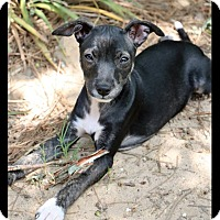 Adopt A Pet :: Pixie - Jackson, MS