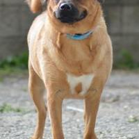 Adopt A Pet :: China - Madison, WI
