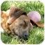 Photo 2 - Boxer Mix Dog for adoption in Cincinnati, Ohio - Hope