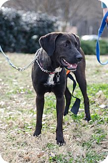 Labrador Retriever Mix Dog for adoption in Cumming, Georgia - Gypsy
