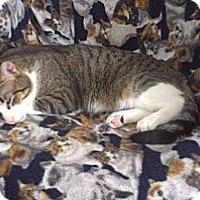 Adopt A Pet :: Mickey - Orillia, ON