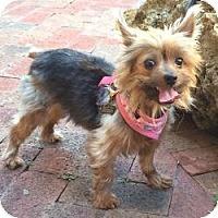 Adopt A Pet :: Cinda - Fairfax, VA
