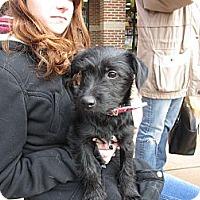 Adopt A Pet :: Elwood - Apex, NC