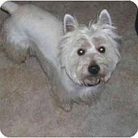 Adopt A Pet :: Coop - Chandler, IN