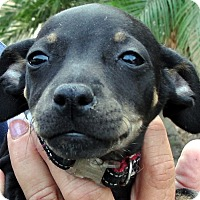 Adopt A Pet :: Miley, Riley - Tumwater, WA