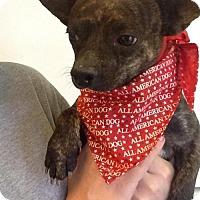 Adopt A Pet :: Junior - Phoenix, AZ