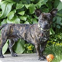 Adopt A Pet :: Balto - Rigaud, QC