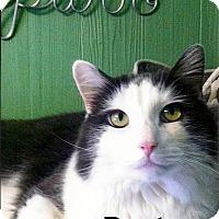 Adopt A Pet :: Dexter - Medway, MA