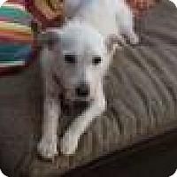 Adopt A Pet :: Damien - Burbank, CA
