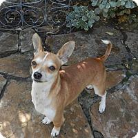 Adopt A Pet :: Howie - Escondido, CA