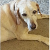 Adopt A Pet :: Bogie - Woodland Hills, CA