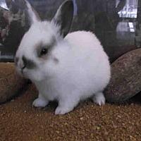 Adopt A Pet :: Roo - Los Angeles, CA