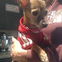 Adopt A Pet :: Leo - Benton, PA