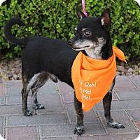 Adopt A Pet :: GIZMO - Las Vegas, NV