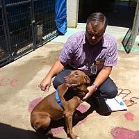 Adopt A Pet :: Cocoa - Marianna, FL