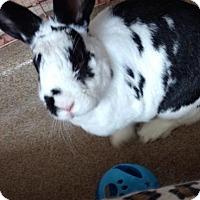 Adopt A Pet :: Miss Marple - Oakland, CA