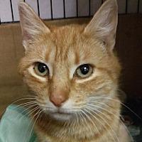 Adopt A Pet :: Buttercup - Brainardsville, NY