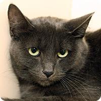 Adopt A Pet :: RILEY - Royal Oak, MI