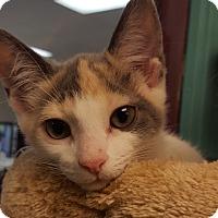 Adopt A Pet :: Saccha - Grayslake, IL