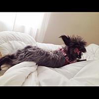 Adopt A Pet :: Pepper - courtesy post - Encino, CA