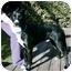 Photo 4 - Border Collie/Labrador Retriever Mix Dog for adoption in Tracy, California - Sparkie