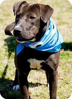 Labrador Retriever Mix Dog for adoption in Birmingham, Alabama - Willow