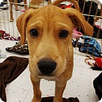 Adopt A Pet :: Toby - Silsbee, TX