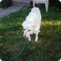 Adopt A Pet :: Rayne - Dundas, VA