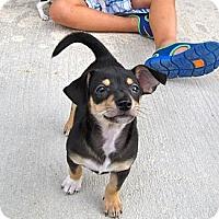 Adopt A Pet :: TUGBOAT - Loxahatchee, FL